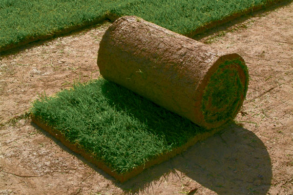 Тревен чим